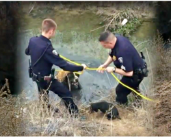 Little Dog Goes Bezerk When 180-lb BFF Gets Stuck, Rescuers Struggle To Save Him