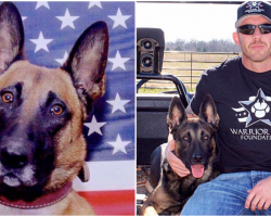 "Navy SEAL Rescues ""Unadoptable"" Retired Military K9s, Helps Them Adjust To New Life"