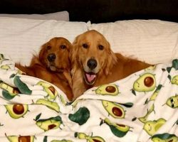 Doggy Best Friends Visit Each Other And Have The Most Adorable Sleepovers