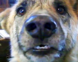 Some Argue That This Is The Best Dog Video Ever Made. Do You Agree?