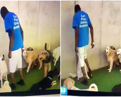 Doggy Daycare Worker Caught On Webcam Kneeing Pup In The Throat Multiple Times