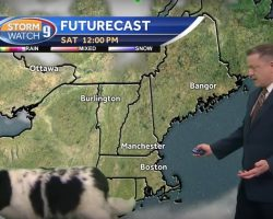 Dog Strolls Onto News Show During Weather Report, Has Anchorman Cracking Up