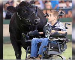 Boy In Wheelchair Leads Steer In Inspirational Moment, Arena Erupts In Cheers
