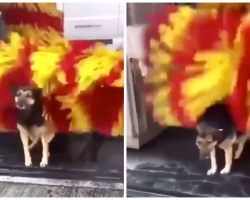 Stray Dog Visits Car Wash Daily To Use The 'Petting Machine'