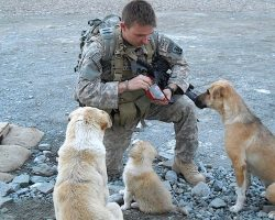Everyone Has Their Own Superhero. For This Soldier, It Was These 3 Dogs