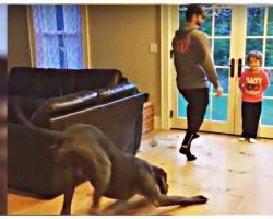 Great Dane Sees Owner Exercising, Mimics His Moves In Rip-Roaring Video