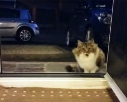 Homeless cat begs to come into the house, then the owner realizes that she is not alone