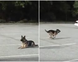 With A Gesture From His Handler, K9 Runs To Car And Impresses Cops With Trick