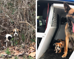 K9 Super Happy And Proud Of Himself For Rescuing Three Pups Abandoned In The Brush
