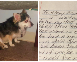 Woman Gives Up Old Dog To Shelter With A Heartbreaking Letter Why