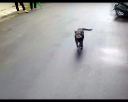 Dog Can't Find Her Way Home For 6 Days, Cries Real Tears When Owner Finally Finds Her