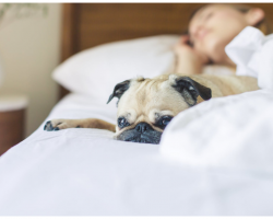 Study Proves Dogs Sleeping In Bed Helps Chronic Pain Sufferers