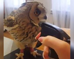 Owl's About To Get Bathed With Squirt Bottle, Has Internet Cracking Up With His Reaction To It