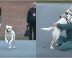 Soldier's Service Dog Joyfully Reunites With The Inmate Who Trained Him