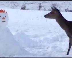 Deer Stumbles Upon Snowman In Her Path, Knows Exactly What To Do With It