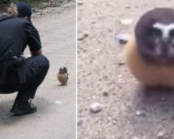 Police Officer Finds Tiny Baby Owl And Has The Most Adorable Conversation With Her