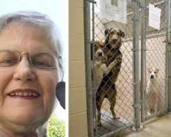 Woman asks shelter for oldest, hardest to adopt dog that no one wants. Here's who they gave her