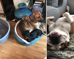 15 Pics To Show Why It's Always Better To Have More Than One Pet