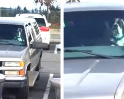 Dad Leaves Dog In Car Until He's Caught On Camera Grabbing Dad's Attention