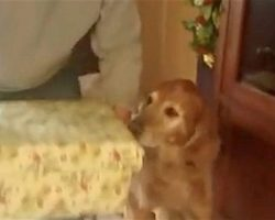 Senior Dog Overjoyed to Get Puppy Surprise for Christmas