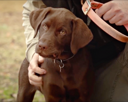 Man brings new puppy to meet someone that taught him the most precious life lesson