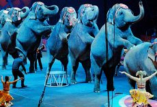 New Jersey Becomes First U.S. State To Ban Use Of All Wild Animals In Circuses