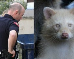 Cop Hears Rustling In A Dumpster – Out Pops One Of The Rarest Creatures On Record