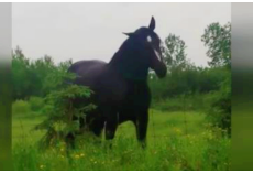 2 Girls Playing Fleetwood Mac Freak Out When Horse Starts To Dance To The Song