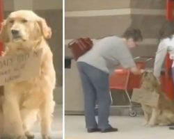 Lonely Dog Sits Outside Target and Won't Budge – Then Shoppers Read The Sign Around His Neck
