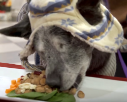30 Homeless Animals Have A Holiday Feast And Feel Love For The First Time