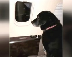 Dog Is Abandoned At Shelter Twice, Then Wealthy Heiress Puts Her On A Plane To Save Her