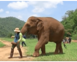 Mother Elephant Leads Caretaker To Baby So She Can Sing Her A Lullaby