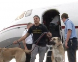 Airline Denies Request To Fly Marine's Dogs To New Base, Heiress Steps In With Private Jet