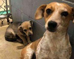 Mama Dog Hides Her Baby To Protect Him From Scary Kill Shelter