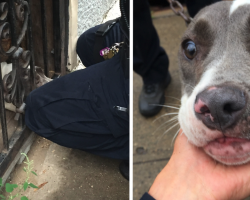 Officer Finds And Saves Dog Chained To A Door, And Then She Gives Him That Look