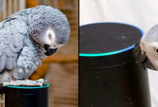 Talkative Parrot Meets Alexa And Won't Stop Ordering Things From Amazon
