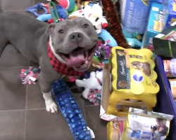 Shelter Has Their Animals Pick Out Gifts From Under The Tree Before Christmas