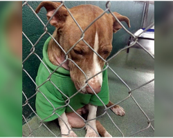 Sad Shelter Dog's Only Christmas Wish Was To Find A Loving Home For The Holidays