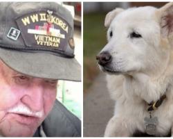 Nobody Wanted 13-Yr-Old Shelter Dog 'Til Elderly Veteran Took One Look At Him