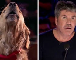 Singing Dog Performs On America's Got Talent, Simon Cowell Gives A Standing Ovation