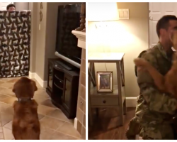 Dog's Reaction To Soldier Dads Return Home Has The Internet Talking