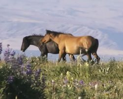 She Sees Two Horses Trotting Among Wildflowers, But Who Joins Them? So Incredible!