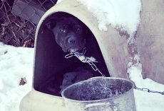 Authorities warn people to 'Bring Dogs Inside' after several dogs found frozen solid