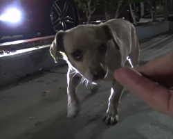 Abandoned Dog Spent All Day Begging For Food In A Starbucks Parking Lot