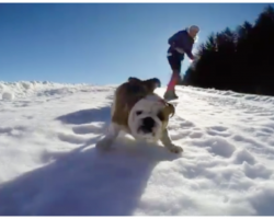 Dog Finds Perfect Opportunity To Take Herself Sledding- And Just Won The Internet