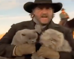 Cowboys Herding Cats Clip Makes For A Well-Spent Minute Of The Day