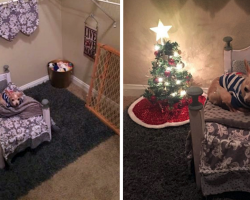 Spoiled Senior Chihuahua Has Spare Closet Turned Into Her Own Personal Room