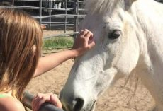 10-Year-Old Girl Tames A Wild Mustang Found On Freeway