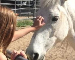 Wild Horse Is Petrified Of Humans. When This 10-Year-Old Meets Her, Unbelievable…