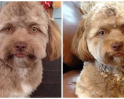 A Dog With A 'Human Face' Has The Internet Freaking Out
